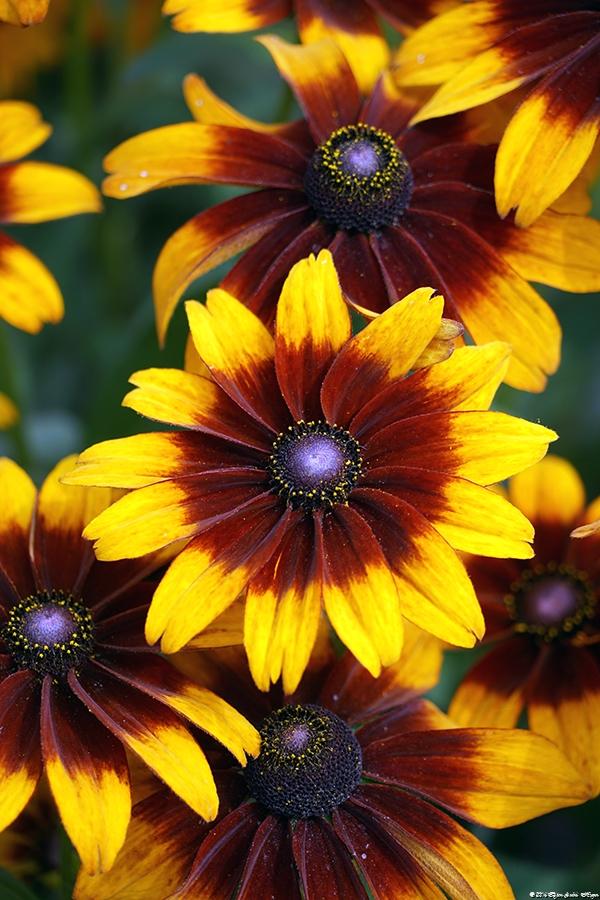 Bremen flower