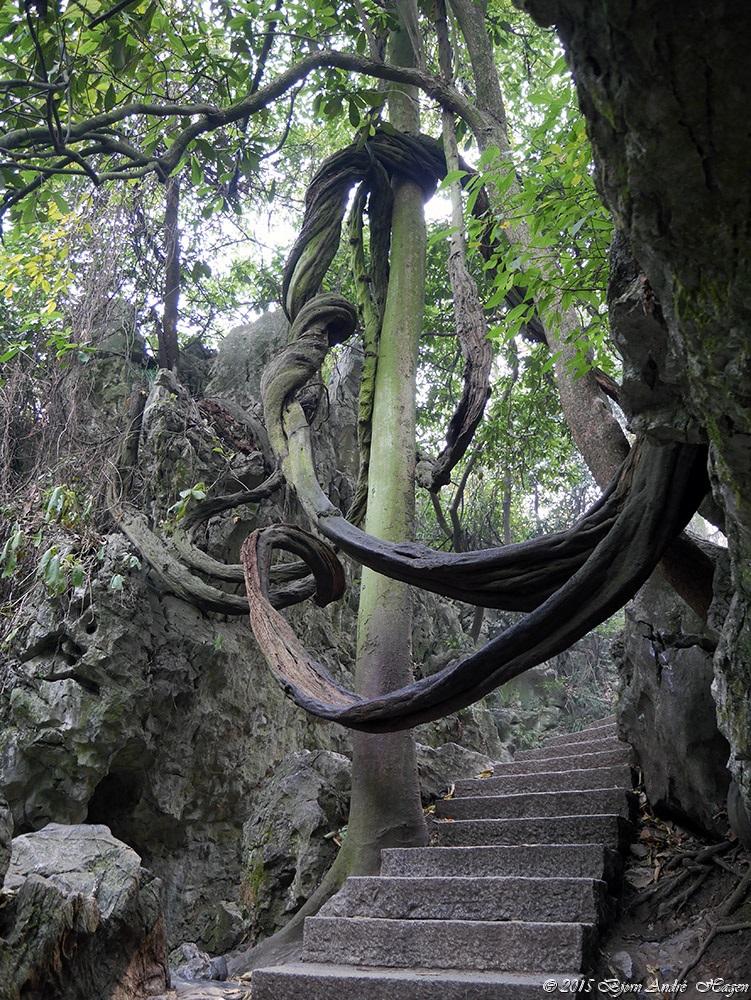 China tree