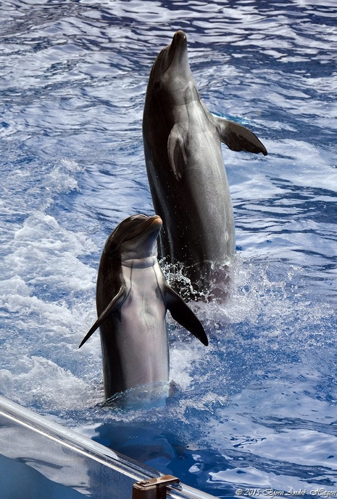 DolphinDancers