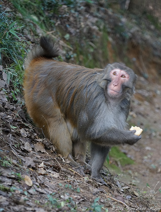 Suzhou Monkey 12