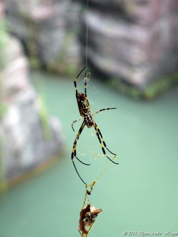 Wenpan Spider