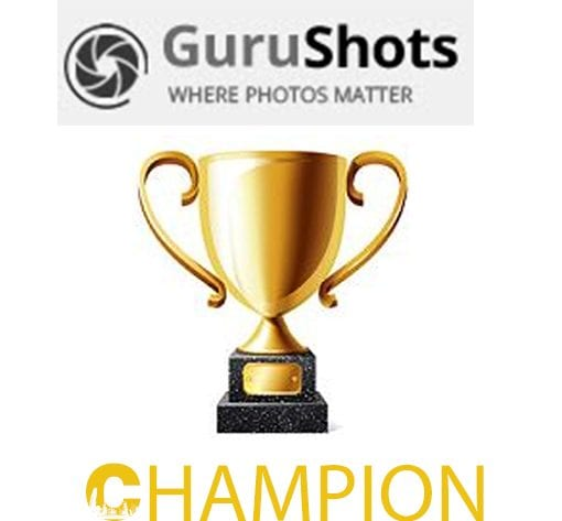 Gurushots champion level