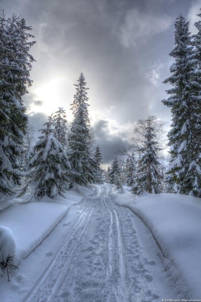Merkdammen Vinter #5