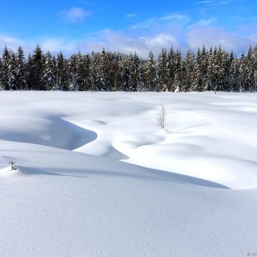 Merkdammen Vinter #6