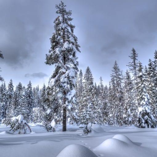 Merkdammen Vinter #1
