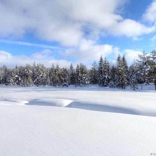 Merkdammen Vinter #3