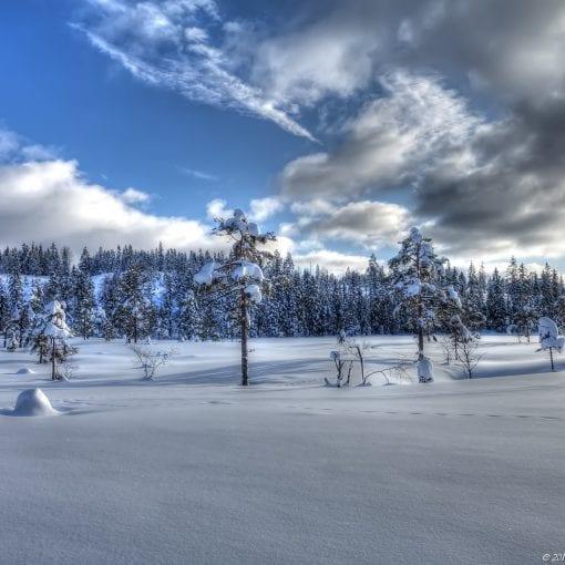 Merkdammen Vinter #4