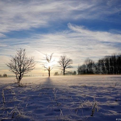 Vinter sol