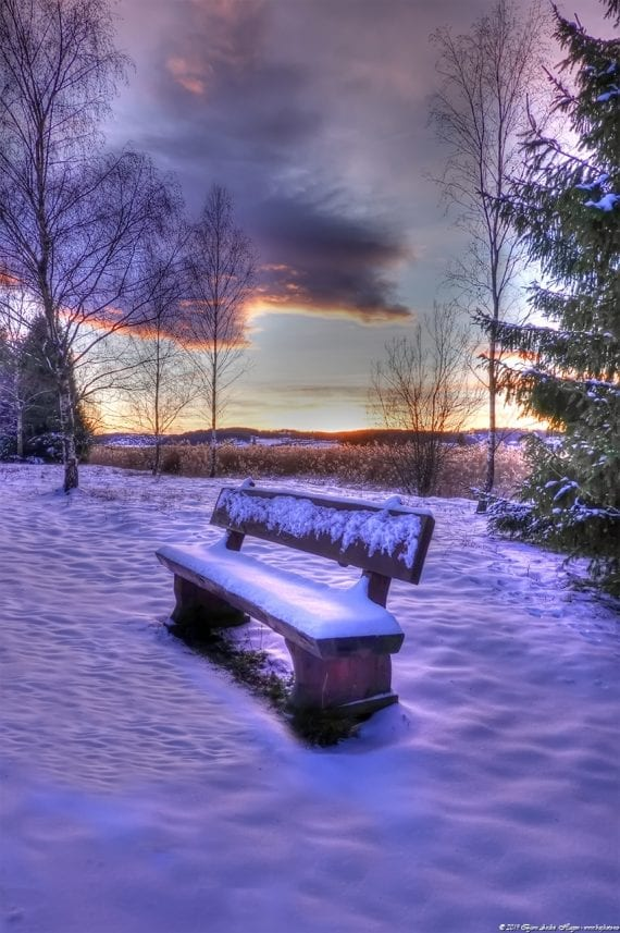 The bench in the snow