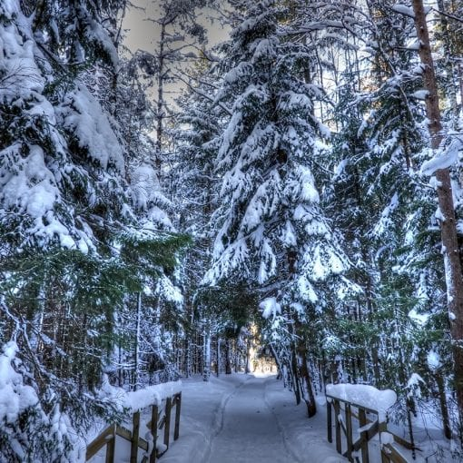 InTheWinterforest