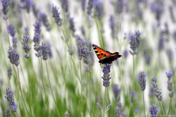 Valle de los Caídos Butterfly 1