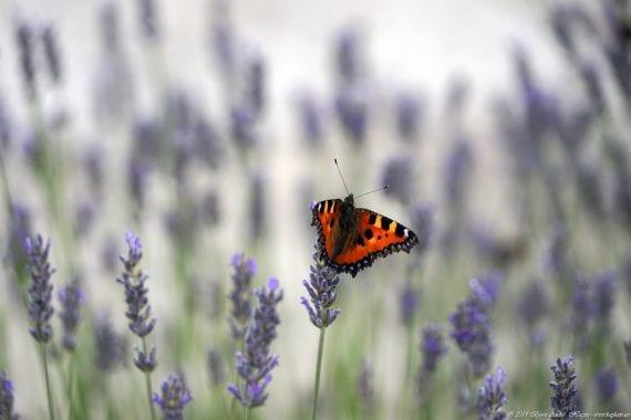 Valle de los Caídos Butterfly 2