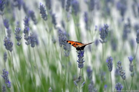 Valle de los Caídos Butterfly 3