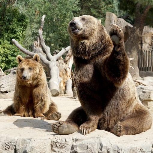 Madrid zoo Bear