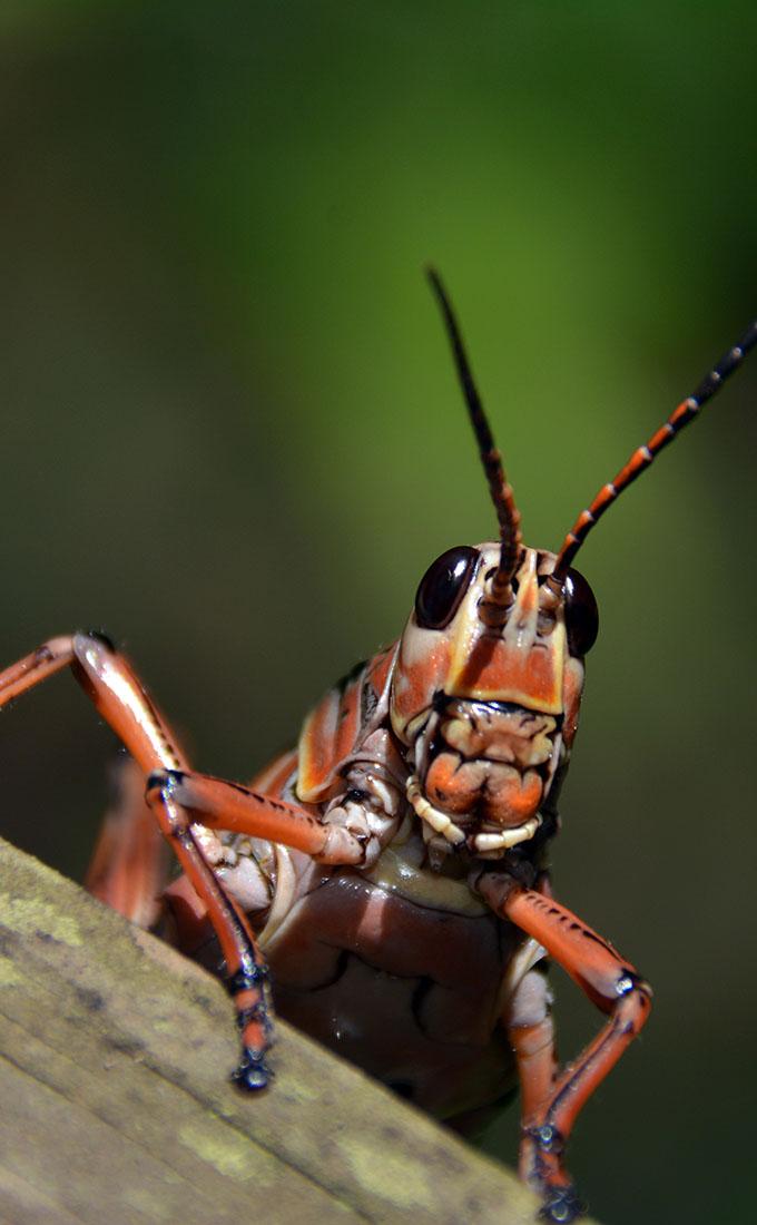 Gallery_insekt