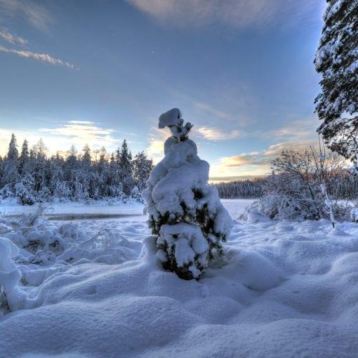 Small Winter Tree