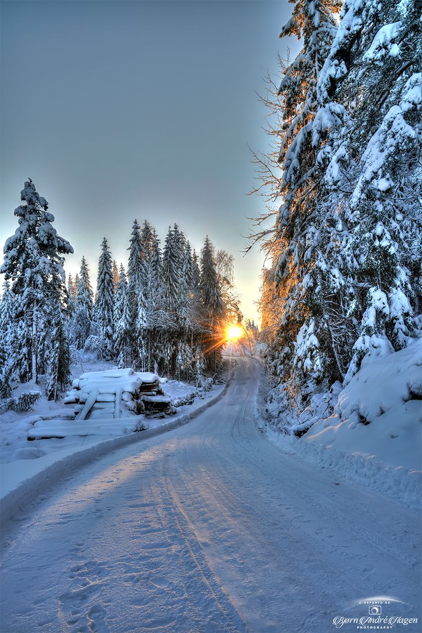 Sunset in the winter forest