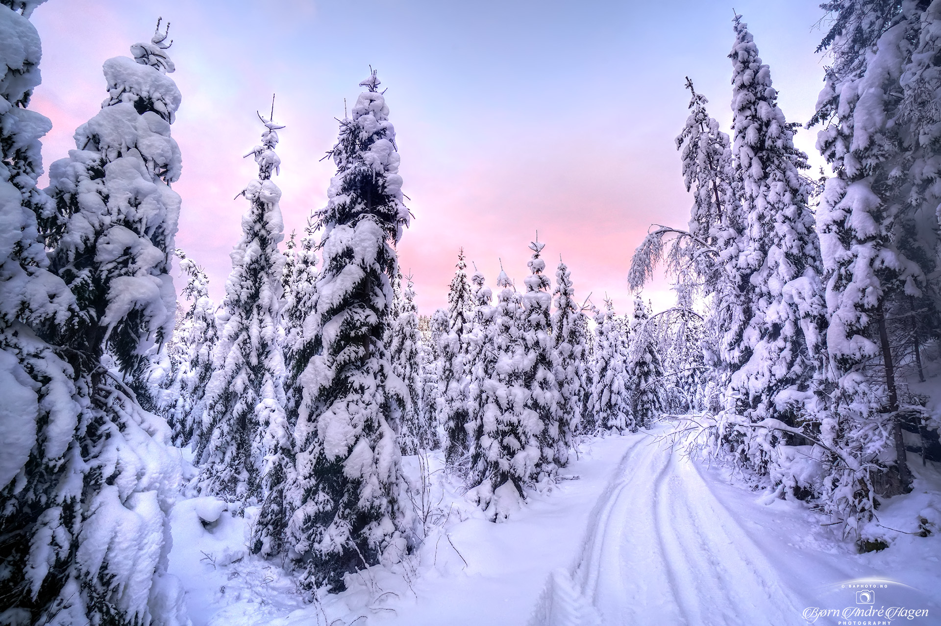 Winter forest pink sky