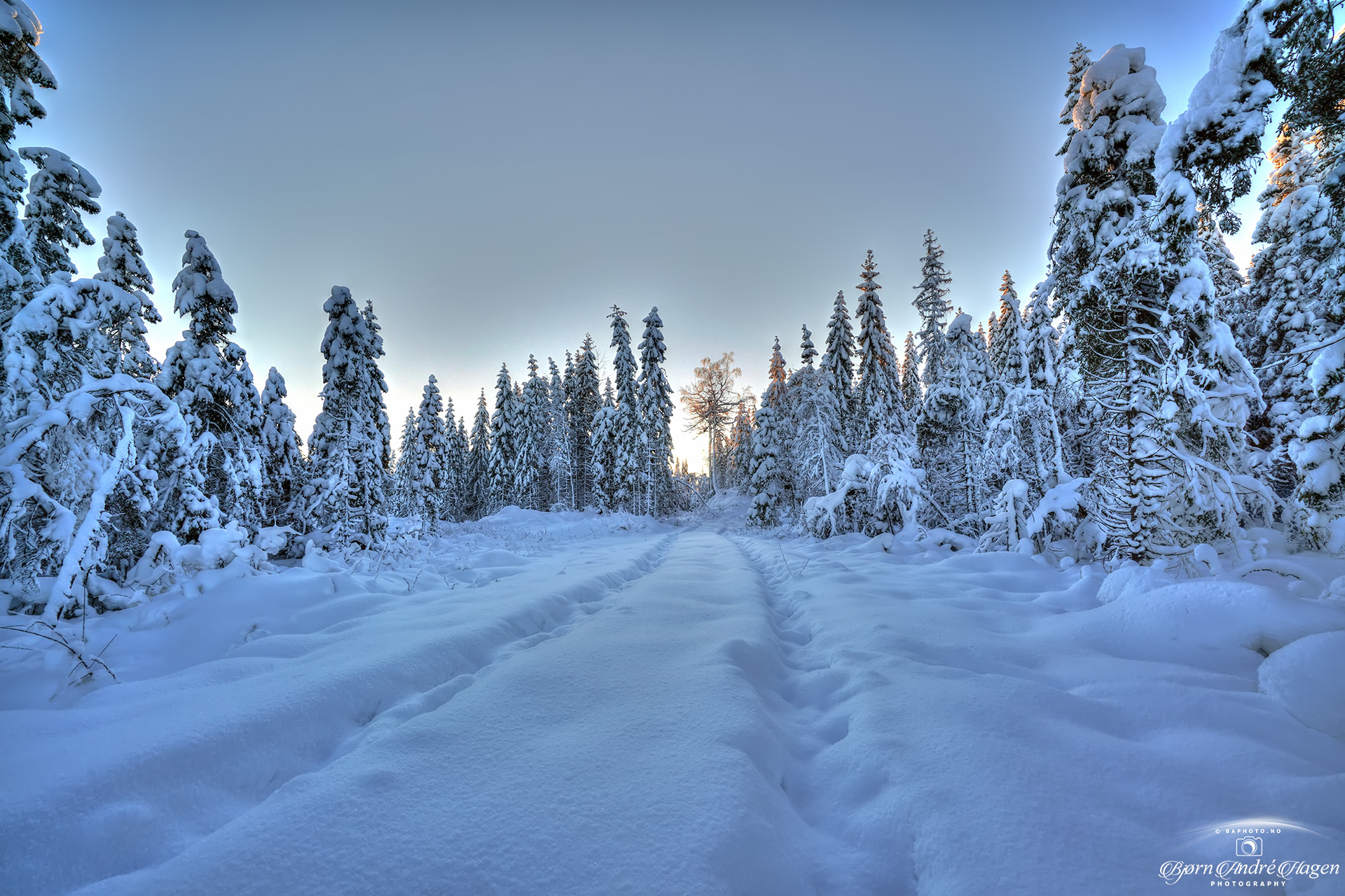 Winter tracks January 21