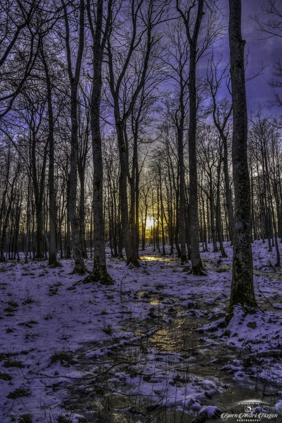 Frozen winter creek