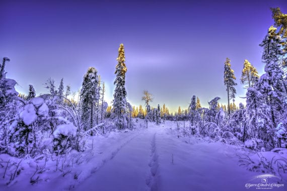 Winter tracks in sunset January 21